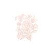 kleine-beige-bloem.-def.jpg