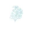 kleine-blauwe-bloem-vierkant.jpg