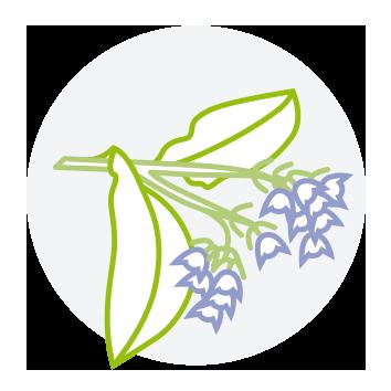 Smeerwortel-Feeling Goods