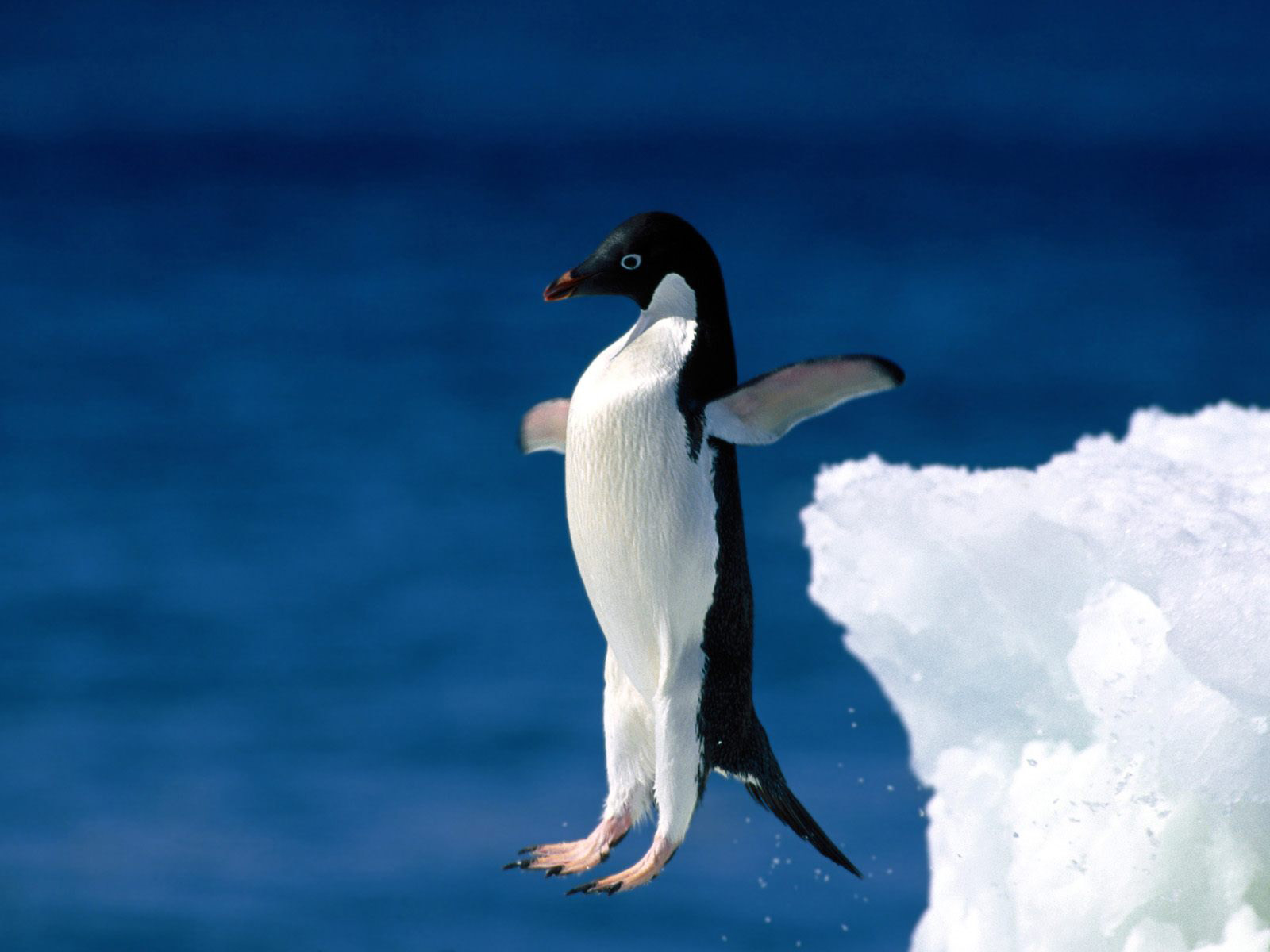 Pinguin-decemberdingen-FeelingGoods