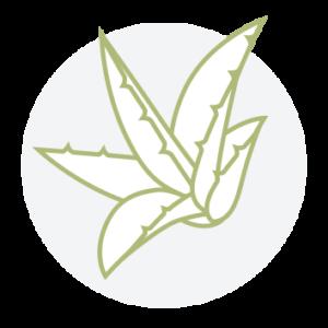 Aloe-vera-Feeling Goods